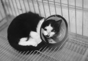 杭州计划投资30万元对流浪猫实施绝育2016年3月30日