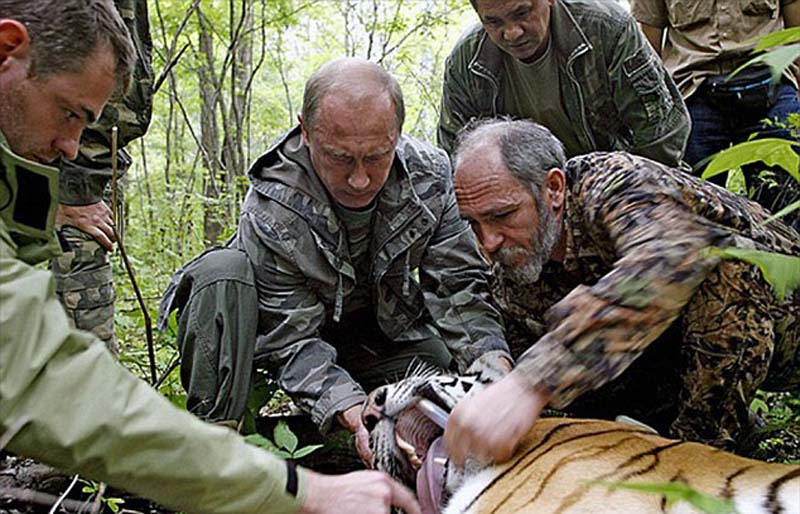 普京一直致力于保护阿穆尔虎工作,曾为kuzya亲手