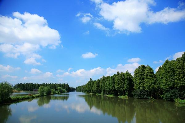 到兴化出口下来后,经沙兴公路复行38公里后,来到了李中水上森林公园.图片