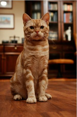 东京台看板猫Maago