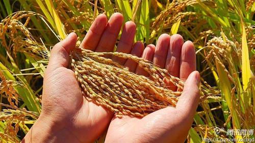 世界粮食日全球气候变化影响粮食安全