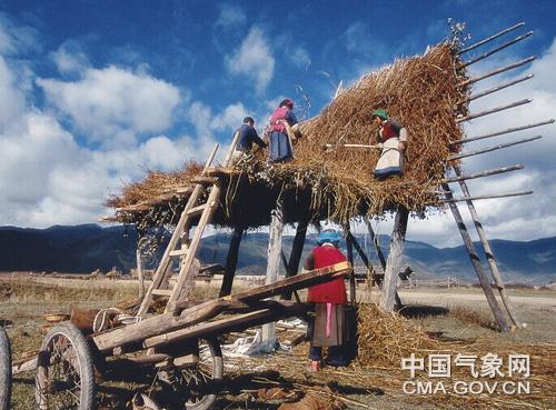 迪庆:积极做好高原秋收秋种气象服务工作
