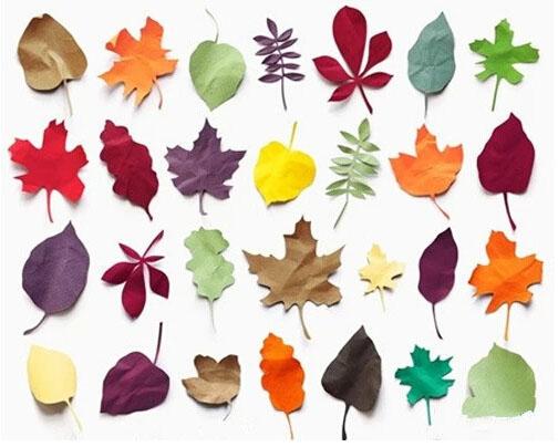 抓住秋天的尾巴,你和宝宝做秋叶画了么?图片
