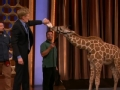 《柯南秀片花》柯南秀现场上演动物大游行 柯南喂长颈鹿喝奶