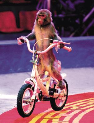 猴子骑自行车-来洋人街看国际大马戏 组图图片