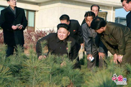 中国网11月11日讯 当地时间2014年11月11日报道,朝鲜平壤,根据《劳动新闻》报道,朝鲜最高领导人金正恩视察种植园,期间金正恩还蹲在地上,检查树苗种植情况,看起来腿疾已无大碍。