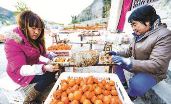 村民正在旋柿饼