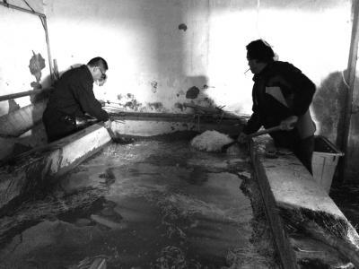 """""""黑作坊""""的豆芽在脏乱不堪的水泥池中清洗。"""