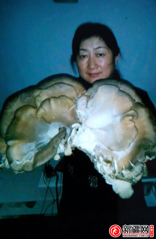 ...杨树根四周发现了野生杨树蘑菇,其中有一大朵的蘑菇长在大杨... 图片 105k 541x828