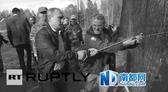 今年5月,普京在俄羅斯阿穆爾州親手放生了3只東北虎。視頻截圖