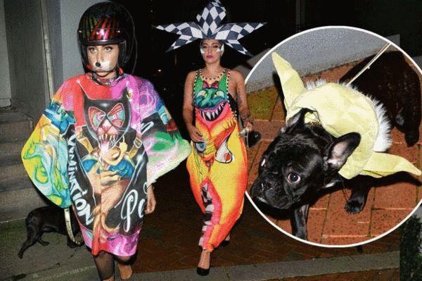 lady gaga雷人照_Lady Gaga再曝雷人照 随行爱犬cos星球大战尤达-搜狐娱乐