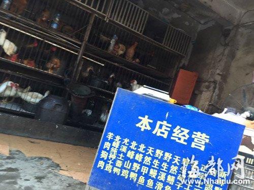 """""""北峰鸡鸭""""店门口招牌上,经营范围包括""""狗肉""""(画圈处)"""