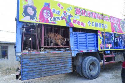 马戏团的车上关着老虎。