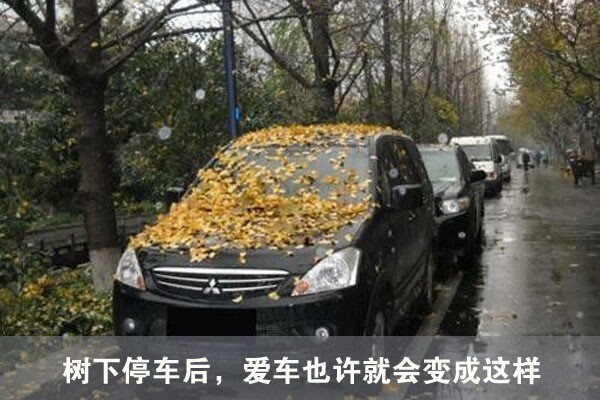 树下停车不安全,在有条件的情况下不建议车主将车放在树下