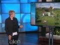 《艾伦秀第12季片花》S12E60 艾伦展示世界奇葩旅馆