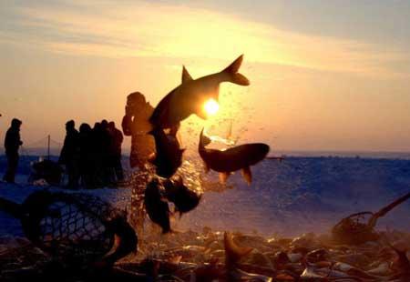 查干湖冬捕:寄托蒙古族人千年不变的希望