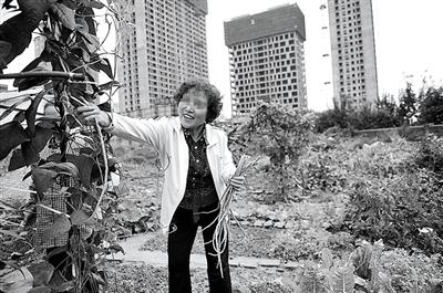 2011年,李妍的母亲艾凤月在甘晓儿童园的旷地种菜。