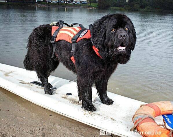 10只保持着世界吉尼斯记录的狗狗