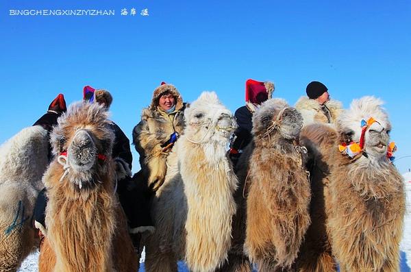 呼伦贝尔大雪原:牧民与骆驼的浪漫风情