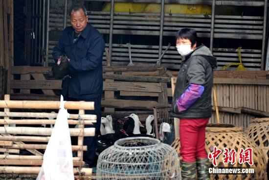 1月7日,厦门一市民在禽类批发市场购买禽产品。 张斌 摄