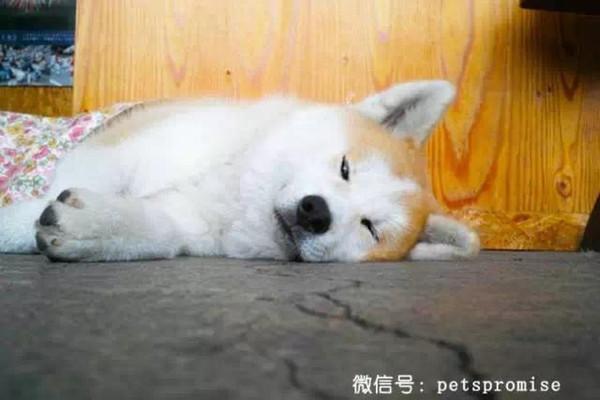 壁纸 动物 狗 狗狗 兔子 600_400