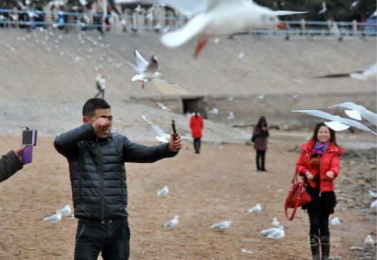 世态万象       十多年来,青岛栈桥每逢冬季就会聚集大量越冬海鸥.