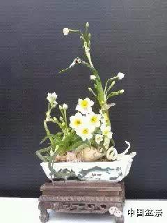 松柏盆景养护技巧与斗南盆景展