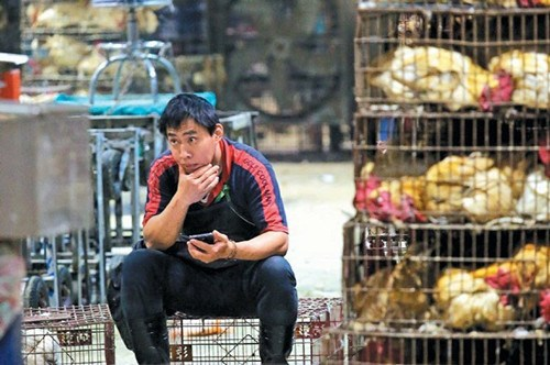 禽流感疫情重创禽类肉品市场,台湾交易量最大的台北市家禽批发市场昨清晨恢复屠宰交易,昨交易冷清,摊商愁容满面。图:台湾《联合报》