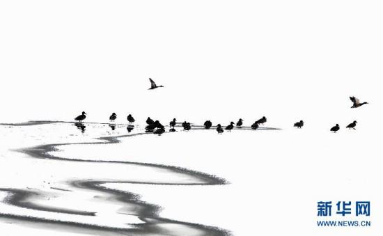 1月18日,鸟儿在云南香格里拉县纳帕海湖面上嬉戏。当日,云南省香格里拉县迎来今年第二场雪,纳帕海风景区银装素裹,分外美丽。 新华社发(梁志强 摄)