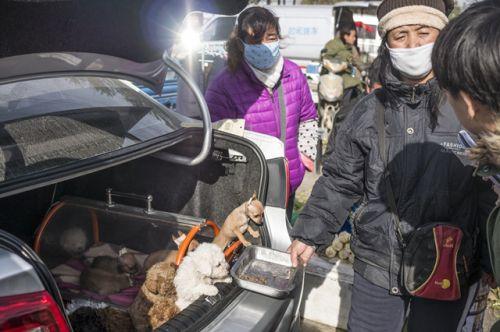狗估客把狗放在汽车后备箱中叫卖