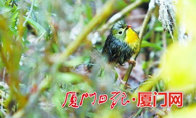昨日鸟儿躲进灌木丛避雨。(本报记者 张淇辉 摄)
