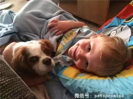 小孩和动物接吻