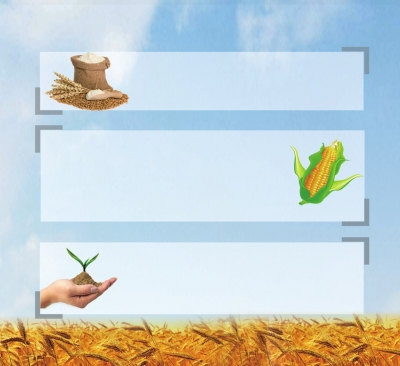 ppt 背景 背景 图片 边框-ppt背景玉米图片