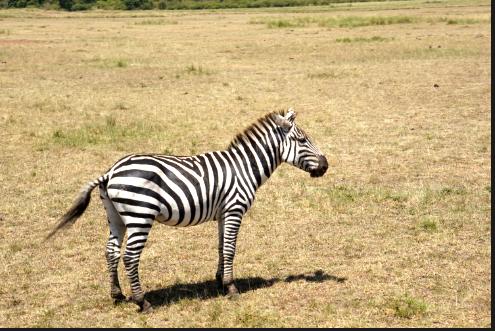 看动物,学单词,走进非洲大草原!