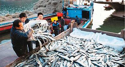 渔民将待售鲜鱼装车。