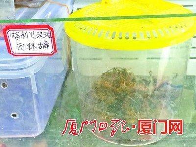 厦门水族馆暗藏箭毒蛙等怪宠 或成生物杀手