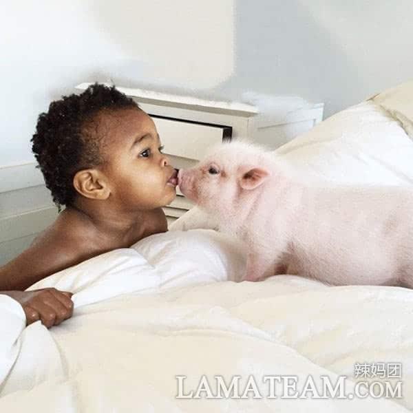 被收养的2岁黑人小女孩和宠物小猪的友谊,两个可爱萌