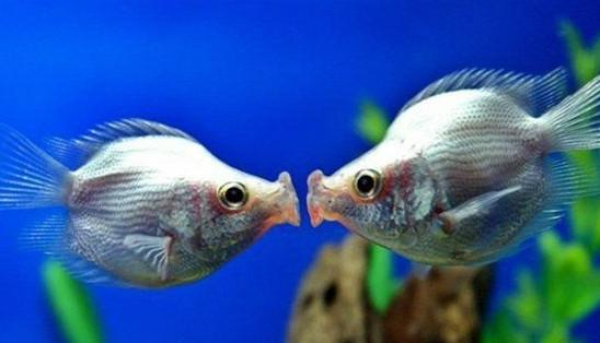剪纸鱼的步骤图解大全