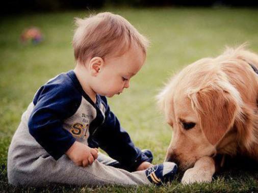 养宠物的坏处英语_养只宠物狗陪宝宝一起长大,有诸多好处-搜狐母婴