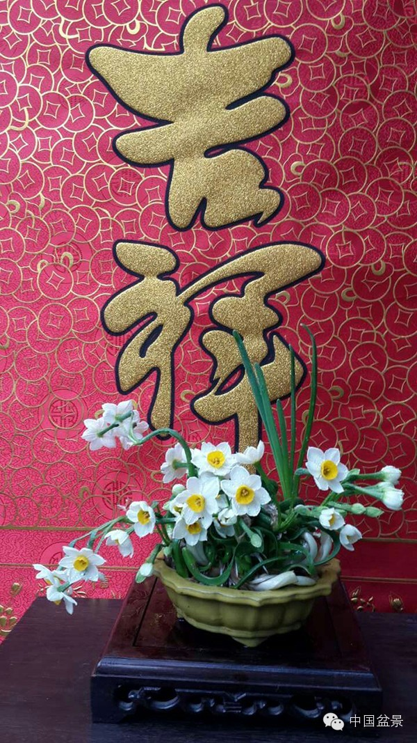 水仙花的花语与传说故事