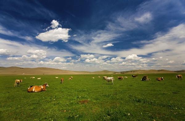 草原 是 世界 四大 草原 之一 素有 天堂 草原 ...
