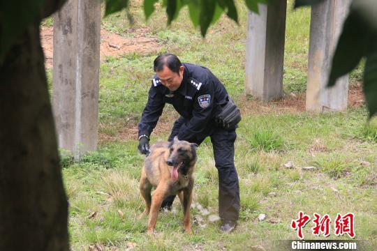 """图为郑伟警官与警犬""""利然""""。 林玲 摄"""