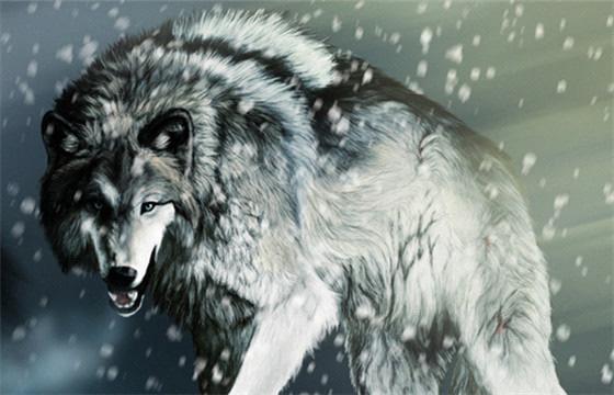狼的图片头像凶猛 qq头像大全