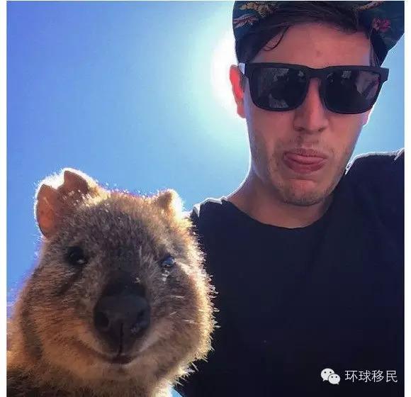 澳洲成精的动物