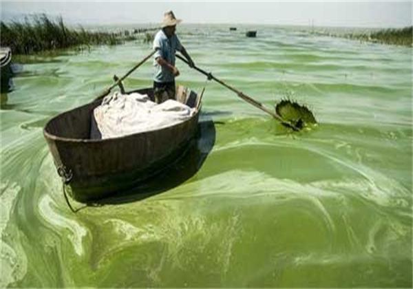 2013年7月19日 安徽巢湖东半湖蓝藻大面积爆发