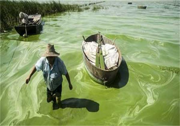 双桥河、柘皋河入湖口、巢湖湿地及孙村、温村一带湖岸沿线蓝藻聚集,水体发出阵阵腥臭,部分水域蓝藻粘稠,几成冻湖。