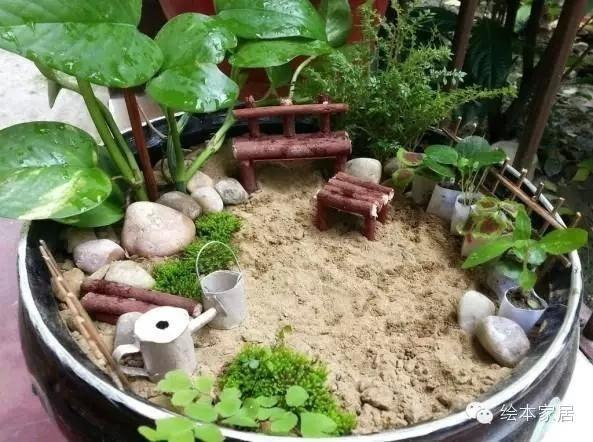 【创意手工】手把手教你微景观制作,diy迷你微型花园.