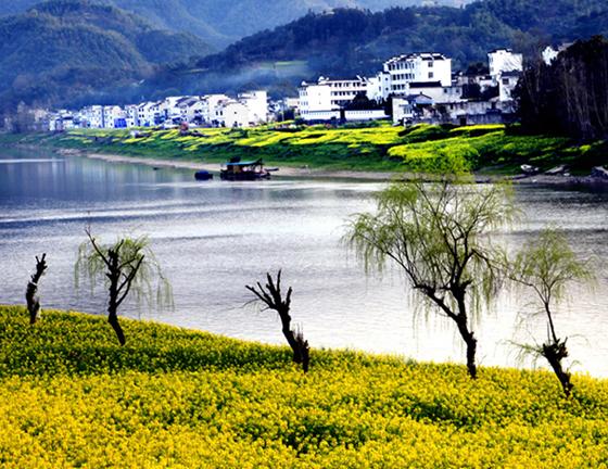 婺源—来中国最美乡村看油菜花海