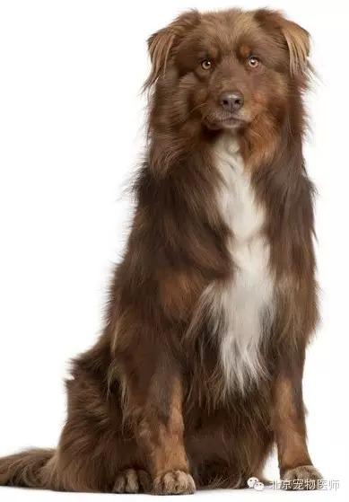 动物性较大全狗_宠物狗狗的常见品种及图片