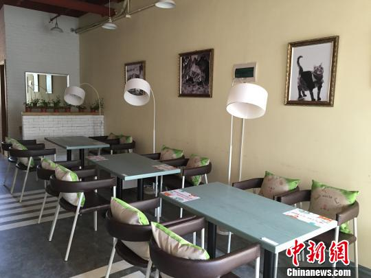 哈尔滨现宠物主题餐厅 宠物可与主人共同用餐 解培华 摄